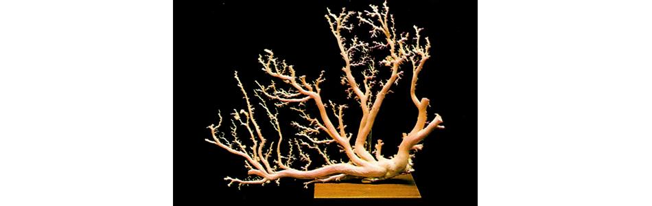 boke coral angel skin