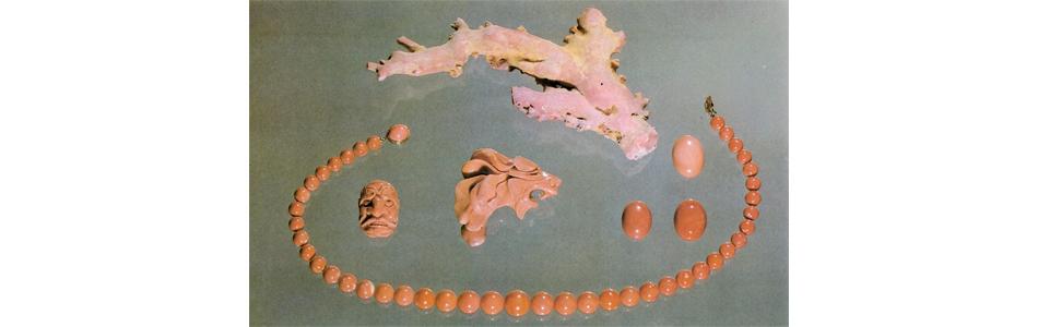 momo coral Japan and Formosa
