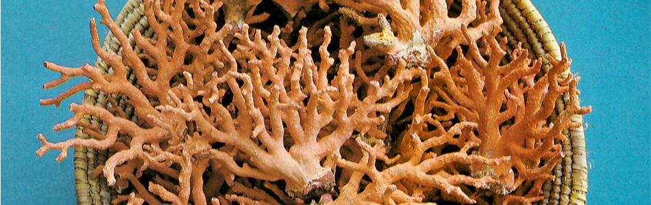 sardinia-coral